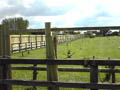 Click to view dom-fence038.jpg